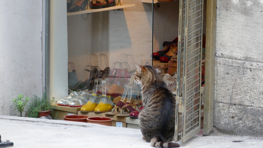 Istanbul, the cat's city.