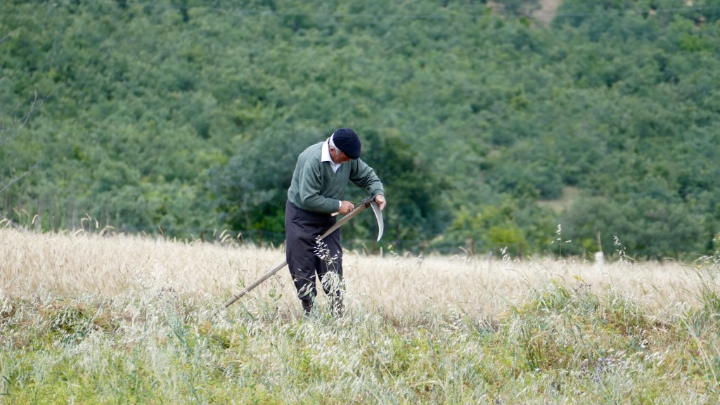 Field worker between Tokat and Niksar