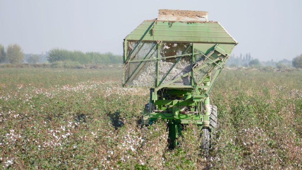 The cotton harvest machine. An exception nowadays.